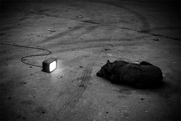 tv-saracie
