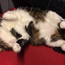 Carcinomul scuamocelular la pisici - de ce să-ţi duci mâţa la veterinar